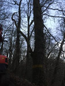 Tree Services South Wales