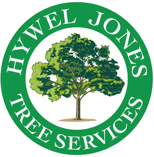 Tree Surgeon in Brynmawr